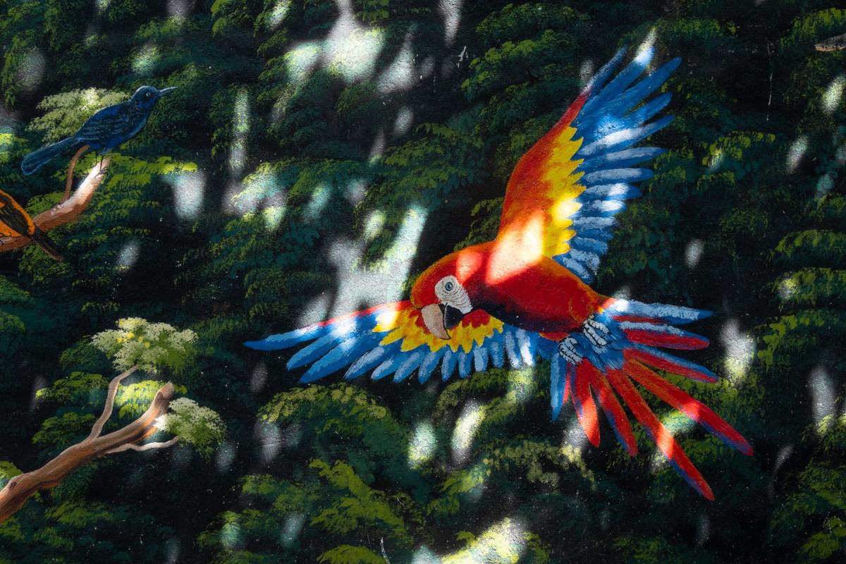 Dorothy Wetzel El Salvador bird painting photo 2